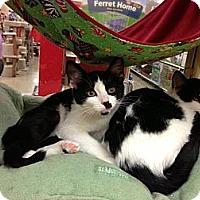 Adopt A Pet :: Tortise - Monroe, GA