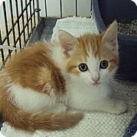 Adopt A Pet :: Peanut Butter - Memphis, TN