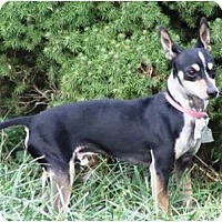 Adopt A Pet :: Ryleigh - Topeka, KS