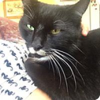 Adopt A Pet :: Duncan - Vancouver, BC