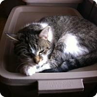 Adopt A Pet :: Winnie - Toronto, ON