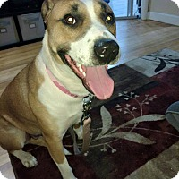 Adopt A Pet :: Sabel - Emmett, MI