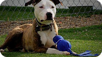 Terrier (Unknown Type, Medium) Mix Dog for adoption in Cedar Rapids, Iowa - Truman