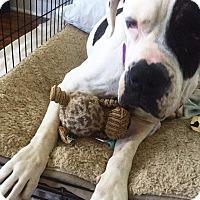 Adopt A Pet :: Baby - Staunton, VA
