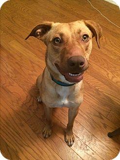 Shepherd (Unknown Type) Mix Dog for adoption in White Settlement, Texas - Lexi