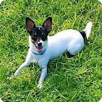 Adopt A Pet :: FRIEDA - Terra Ceia, FL