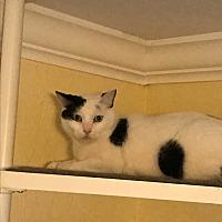 Adopt A Pet :: Marble - Lauderhill, FL