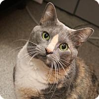 Adopt A Pet :: Grace - Sarasota, FL