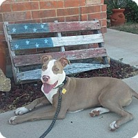 Adopt A Pet :: Bugs - Killeen, TX