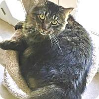 Adopt A Pet :: Vince - Davis, CA