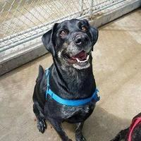 Adopt A Pet :: Bear - Aberdeen, SD