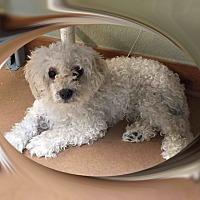 Adopt A Pet :: Adopted!! Chauncey - S.TX - Tulsa, OK