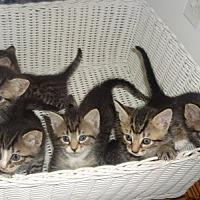 Adopt A Pet :: 7 LIL 'FURRY WONDERS - New York, NY
