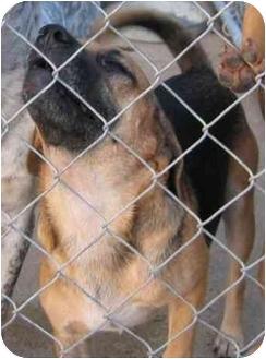 Beagle Mix Dog for adoption in Russellville, Arkansas - Bubba