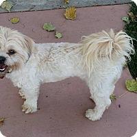 Adopt A Pet :: Benny - Ft. Collins, CO