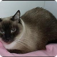 Adopt A Pet :: Mr. Mann - Gilbert, AZ