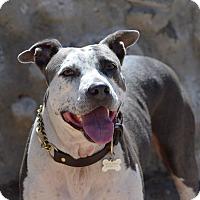 Adopt A Pet :: Rio - Mission Viejo, CA