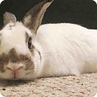 Adopt A Pet :: ZELDA - Brooklyn, NY