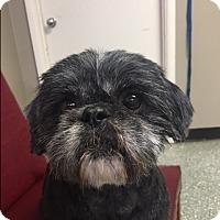 Adopt A Pet :: Sonny - Russellville, KY