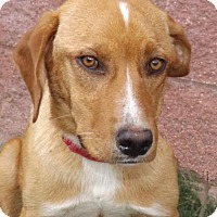 Adopt A Pet :: Blanche - Oxford, MS