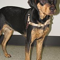 Adopt A Pet :: Dexter - Conroe, TX