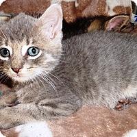 Adopt A Pet :: Martin - Lebanon, PA