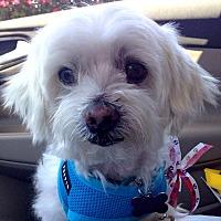 Adopt A Pet :: Cody - Santa Barbara, CA