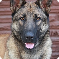 Adopt A Pet :: Ranger von Rastenberg - Los Angeles, CA