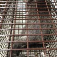 Adopt A Pet :: Tucker - Clarkesville, GA