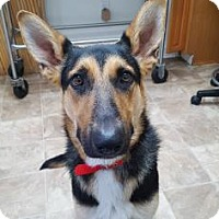 Adopt A Pet :: Arizona - Chico, CA