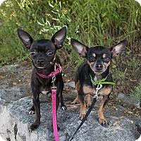 Adopt A Pet :: Vernon - Drumbo, ON