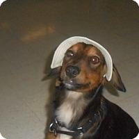 Adopt A Pet :: Maggie - Lockhart, TX