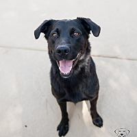 Adopt A Pet :: Jack - Henderson, NV