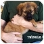 Photo 1 - Spaniel (Unknown Type) Mix Puppy for adoption in Slidell, Louisiana - TWINKLE
