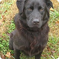 Adopt A Pet :: Doc - kennebunkport, ME