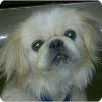 Adopt A Pet :: Manny - Niceville, FL