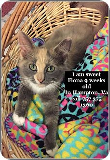 Calico Kitten for adoption in Virginia Beach, Virginia - Fiona