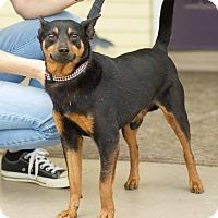 Adopt A Pet :: Sarge - Homewood, AL