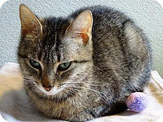 Domestic Mediumhair Cat for adoption in Belleville, Michigan - Reba