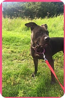 American Pit Bull Terrier Mix Dog for adoption in Anchorage, Alaska - Janie