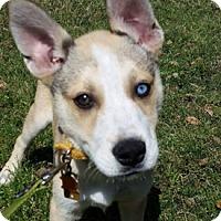 Adopt A Pet :: Miska - West Hartford, CT