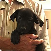 Adopt A Pet :: Easton - Chico, CA