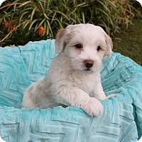 Adopt A Pet :: MICA - Newport Beach, CA
