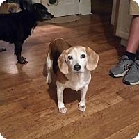 Adopt A Pet :: Sweet Pea - Codorus, PA