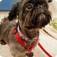 Adopt A Pet :: Belle - Lutherville, MD