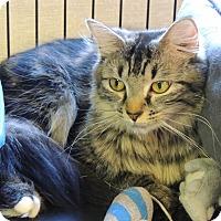 Adopt A Pet :: Kenra - Plainville, MA