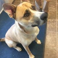 Adopt A Pet :: Benny 451-17 - Cumming, GA