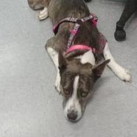 Adopt A Pet :: Jewel - Greensboro, NC