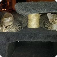 Adopt A Pet :: Hickory - Bethpage, NY