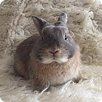 Adopt A Pet :: Apache - Watauga, TX